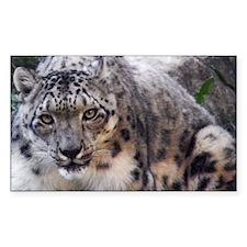 snowleopard Decal