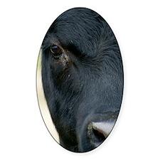 cowpostcards Decal