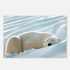 polarsbears5 Postcards (Package of 8)