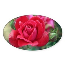 Dew covered rose Decal