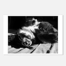 Berner Sleeping Postcards (Package of 8)