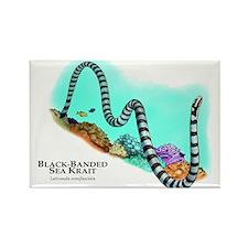 Black-Banded Sea Krait Rectangle Magnet