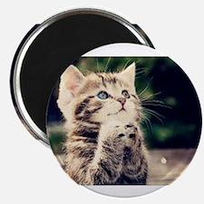 Praying Kitty Magnets
