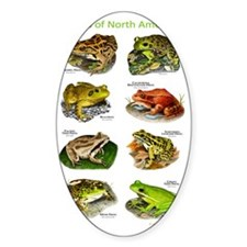 Frogs of North America Decal