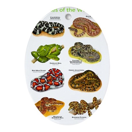 Snakes Oval Ornament