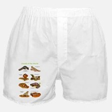 Lizards Boxer Shorts