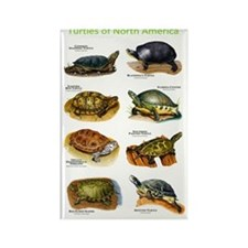 Turtles of North America Rectangle Magnet
