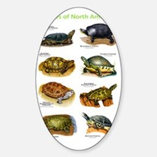 Turtles of North America Decal