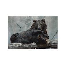 bears Rectangle Magnet