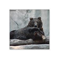 "bears Square Sticker 3"" x 3"""