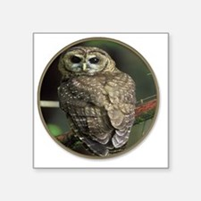 """yule spotted owl Square Sticker 3"""" x 3"""""""