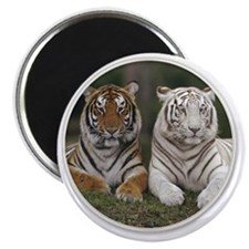 yule tigers Magnet