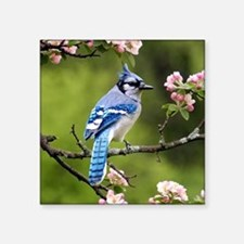 "Blue Jay Square Sticker 3"" x 3"""