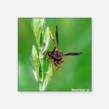 "large wasp copy Square Sticker 3"" x 3"""