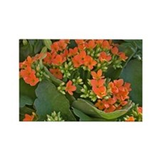 kalanchoe4posters Rectangle Magnet