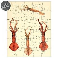 squids2 Puzzle