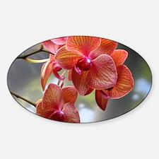 Cymbidium Orchids Decal