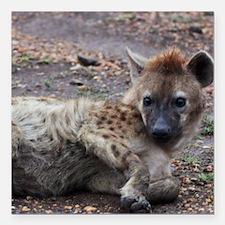 "Hyena Square Car Magnet 3"" x 3"""