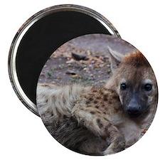 Hyena Magnets