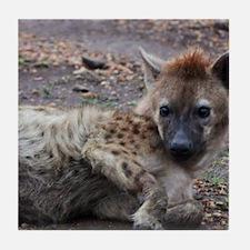 Hyena Tile Coaster