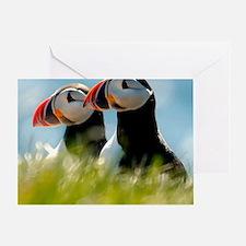 Puffin Pair 14x14 600 dpi Greeting Card