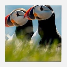 Puffin Pair 14x14 600 dpi Tile Coaster