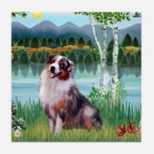 Birches - Australian Shepherd (merle  Tile Coaster