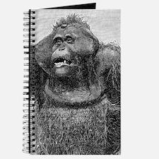 Ancient Orangutan Journal
