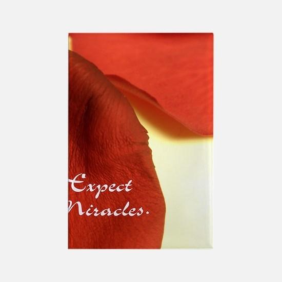 redrosepetals Rectangle Magnet