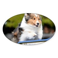 Sheltie Agility Jive Decal