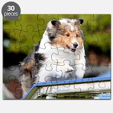 Sheltie Agility Jive Puzzle