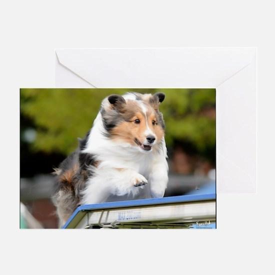 Sheltie Agility Jive Greeting Card