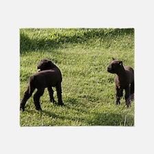 Lambs2 Throw Blanket
