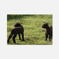 Lambs2 Rectangle Magnet
