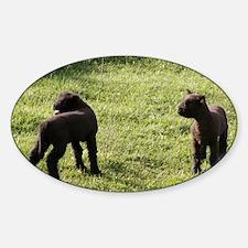 Lambs2 Sticker (Oval)