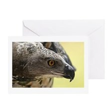African Crowned Eagle Greeting Cards