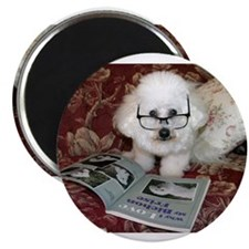 You just Gotta Love a Bichon Magnet