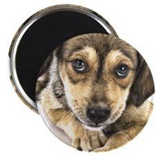 hank_husky_ornament_oval Magnet