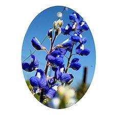 24x24 bluebonnet Oval Ornament