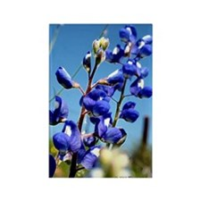 24x24 bluebonnet Rectangle Magnet