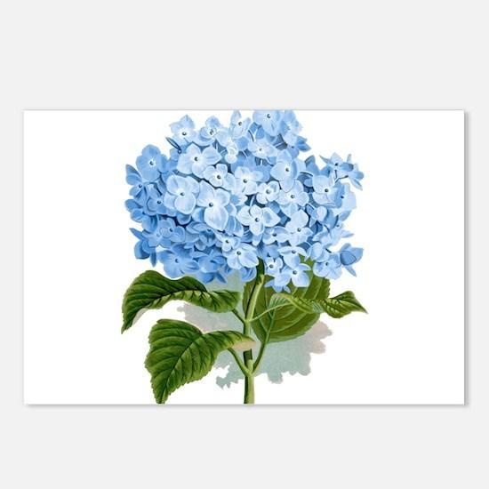 Blue hydrangea flowers Postcards (Package of 8)