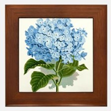 Blue hydrangea flowers Framed Tile