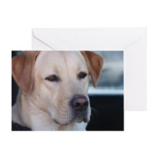 0 cover pets 521 Greeting Card