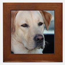 0 cover pets 521 Framed Tile