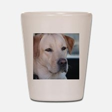 0 cover pets 521 Shot Glass
