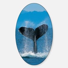 whale tall Sticker (Oval)