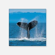 """whale square Square Sticker 3"""" x 3"""""""