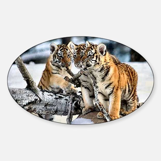 Tiger Cubs in the Snow Sticker (Oval)
