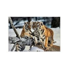 Tiger Cubs Three Rectangle Magnet