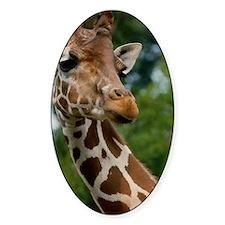 Giraffe Art Decal